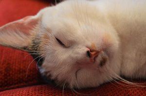 セロトアルファなら睡眠薬不要で快眠できる